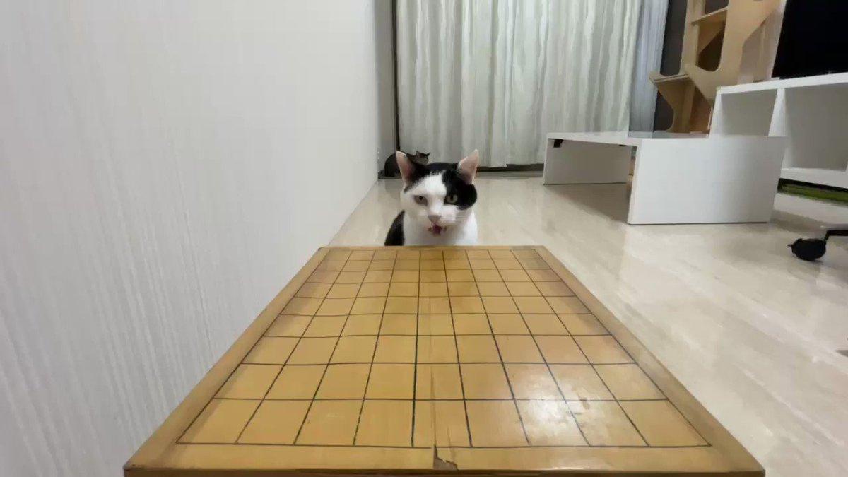 疲れた時はやっぱり猫と将棋崩し!