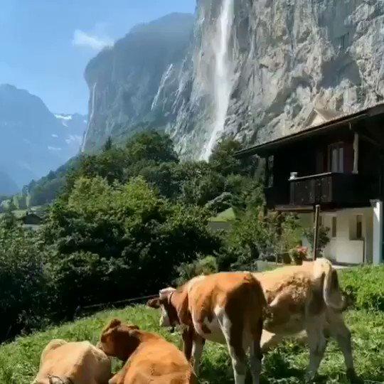Morning 🔆 #church & #cows 🐮#Lauterbrunnen #Switzerland 🇨🇭 https://t.co/Yr0EakkTG2