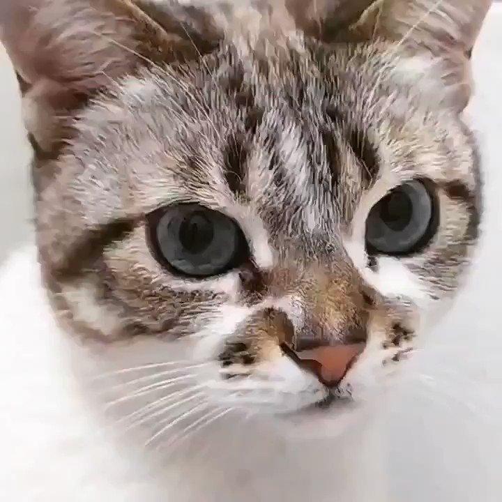 """""""O tempo gasto com gatos nunca é tempo perdido."""" – Sigmund Freud #CatsOfTwitter #cats #pets https://t.co/FyYRuHp8sP"""