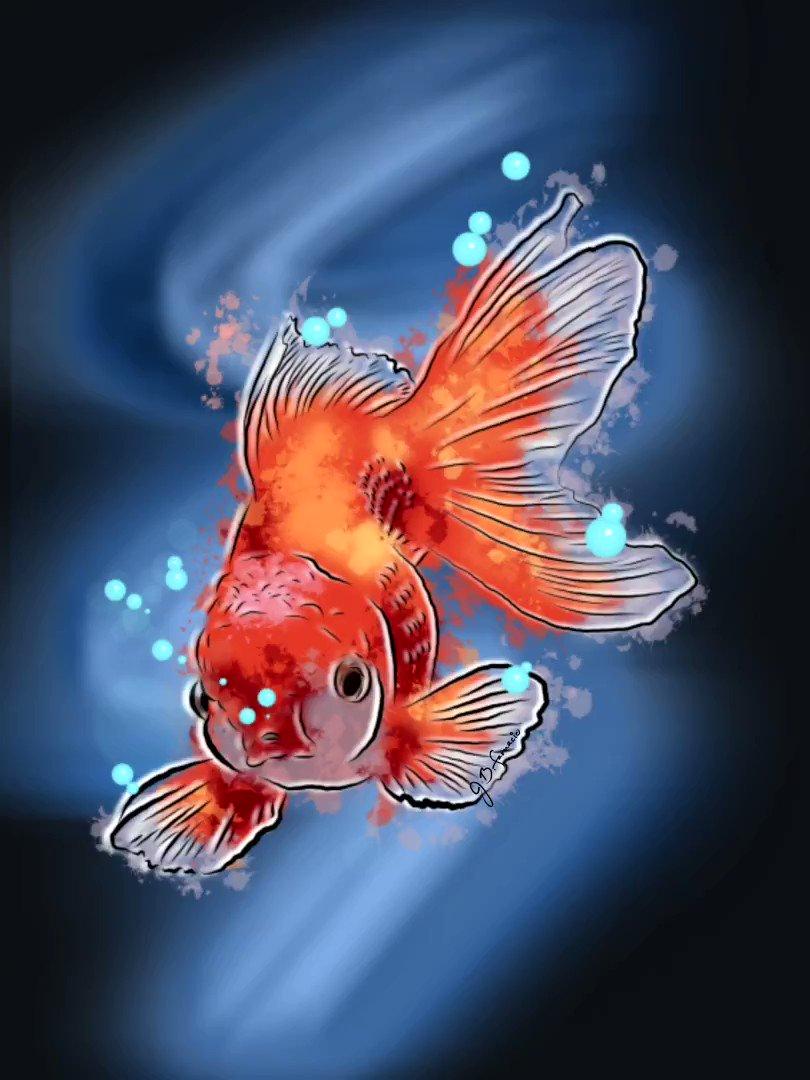 Goldfish . . . . #digitalart #PicOfTheDay #art #Illustrations #illustrationart #digitaldrawing