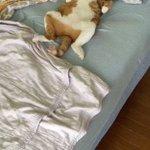 寝起きドッキリ風動画を撮ろうと思ったら?全然起きない猫!