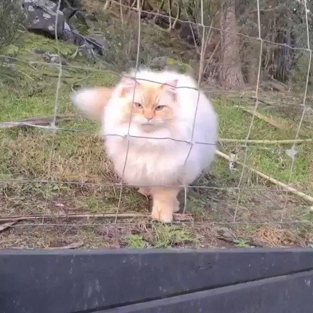 猫が液体と言われる理由