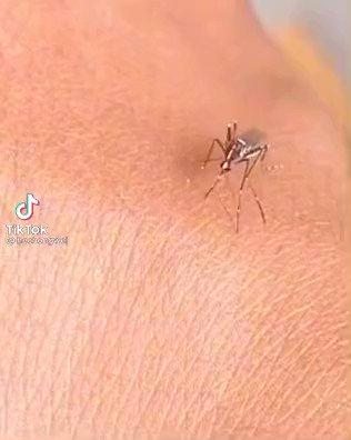 こんなん笑うわw血を吸おうと何度も試みる「蚊」がなぜか可愛く見える動画。