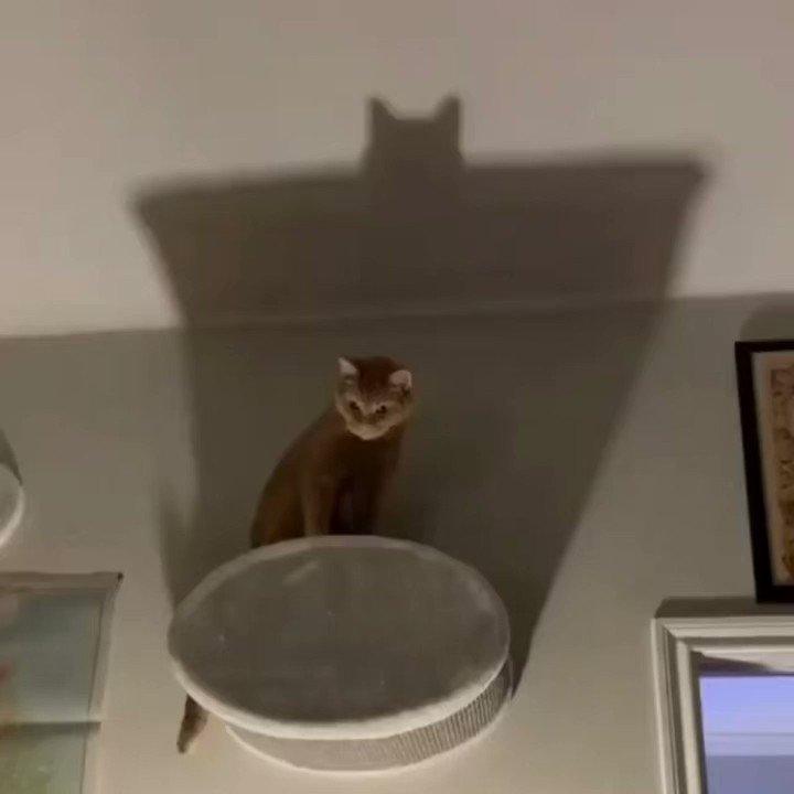 バットマンみたいな猫さん