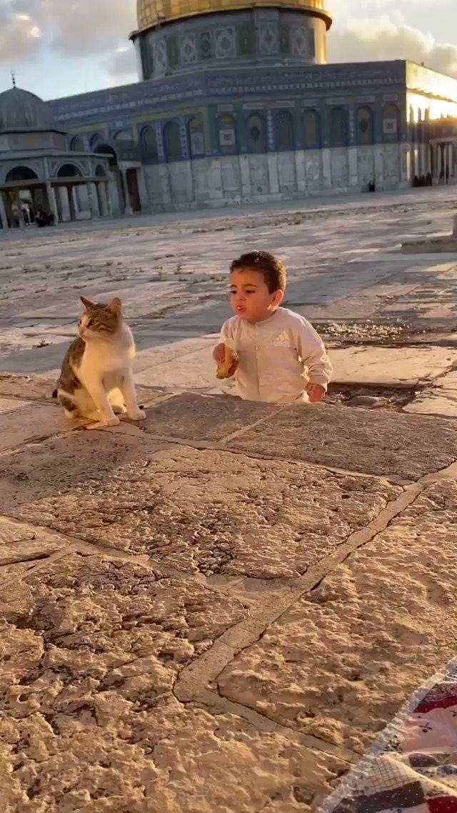 聖地エルサレムの朝の様子、たまたま出くわした猫に朝ごはんを分ける子供