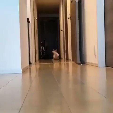 何かをプラプラさせながら猫さんが 連れてきたモノは…