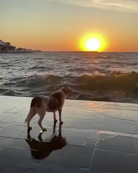 夕日と犬を撮影してたら凄かった….
