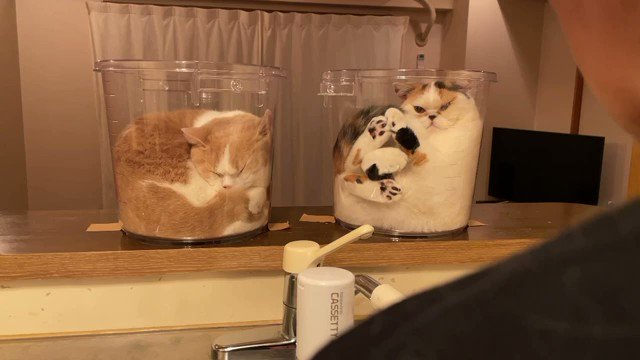洗い物してる前に2つバケツ置いたらやっぱり入りにきた。