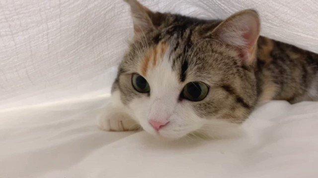 お布団の中でうごうご💨#猫