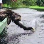ナマケモノがかわいい!お水で遊びたいのは人間も動物も同じなんですね!