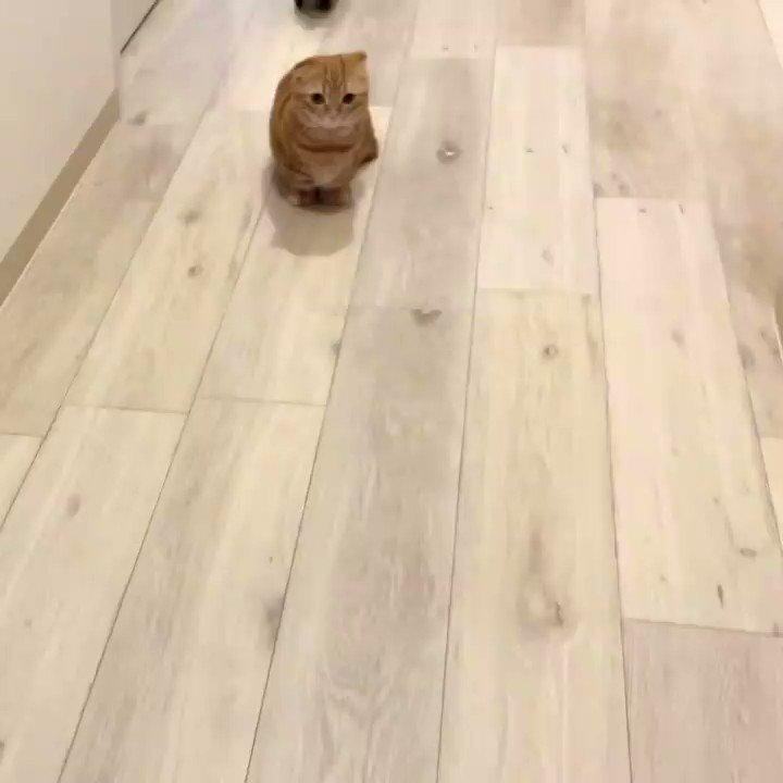 てちてち#猫 #cat