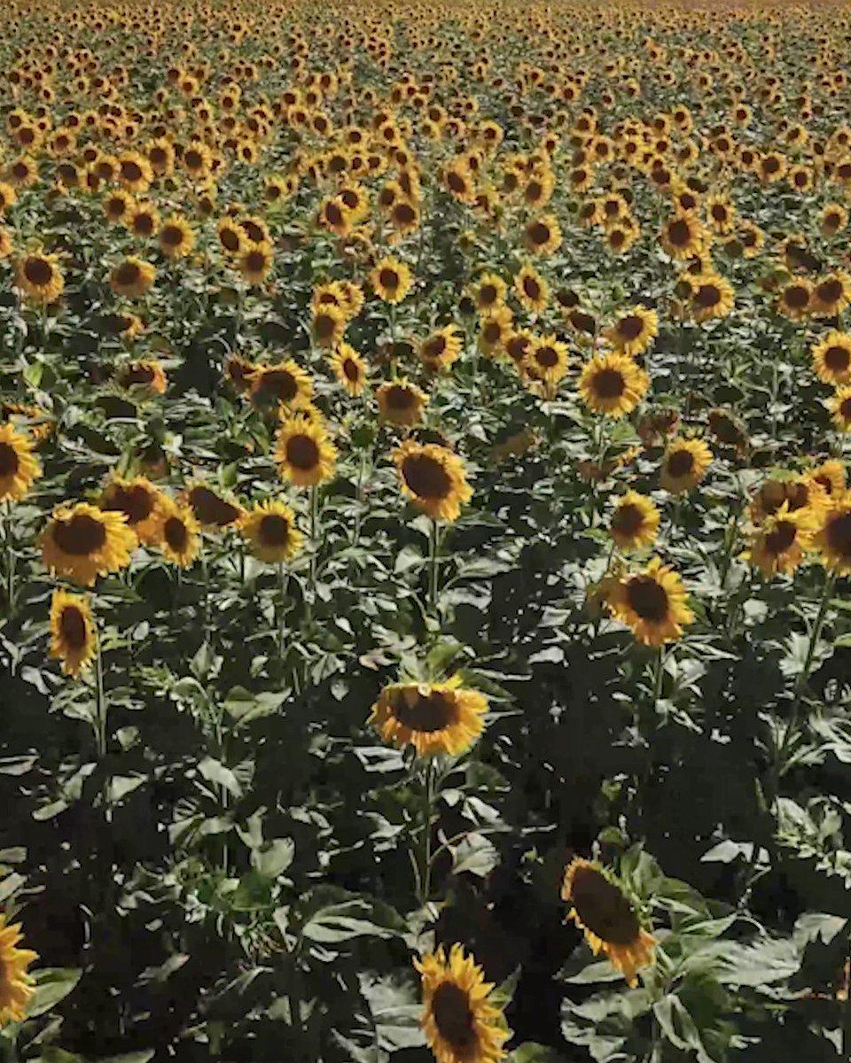 Image for the Tweet beginning: 🌺💐🌼 Florece la Primavera y