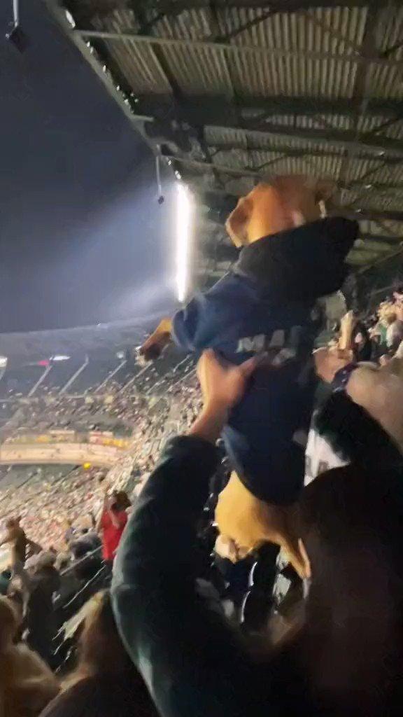ライオンキングの音楽に合わせて愛犬を掲げる野球の観客!