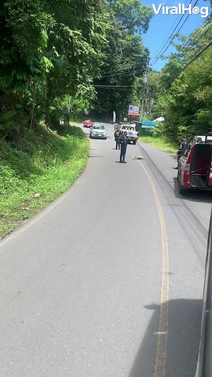 地元の警察官が集まっていたので何事かと思ったらナマケモノが安全に道路を横断出来るように見守っていた…
