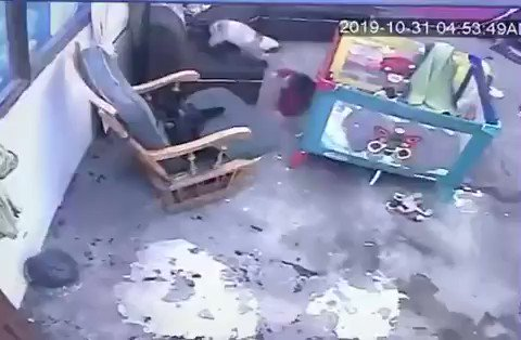幼児が階段から落ちそう!→ニャンが爆走して階段から落ちるのを防ぎます