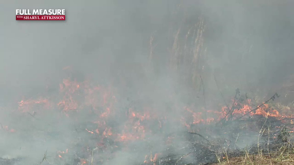 Image for the Tweet beginning: Setting forest fires to prevent