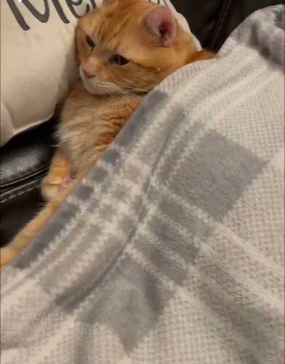主人に攫われる猫さん