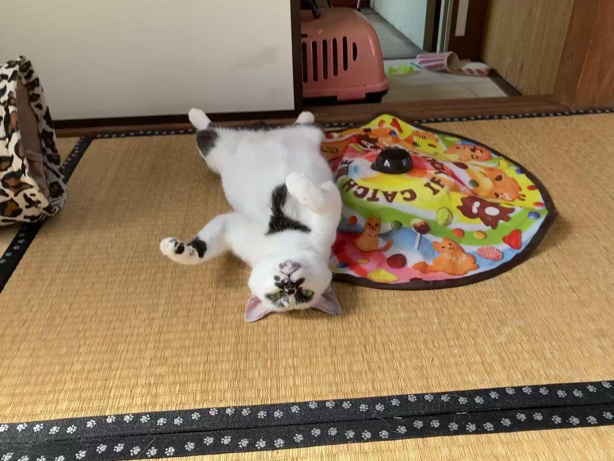 アイドルのイメージビデオ #熱海MuddyCat #熱海 #BAR #猫