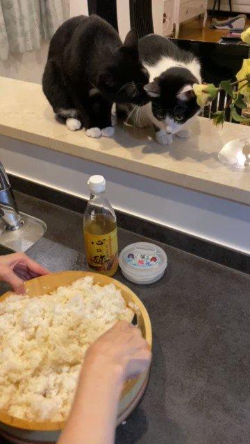 酢飯を作るときいつもふたりで見守ってくれるので酢加減のチェックをお願いしてます