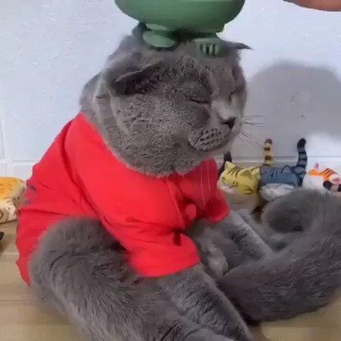お肌のマッサージを欠かさない猫さんが可愛すぎる…