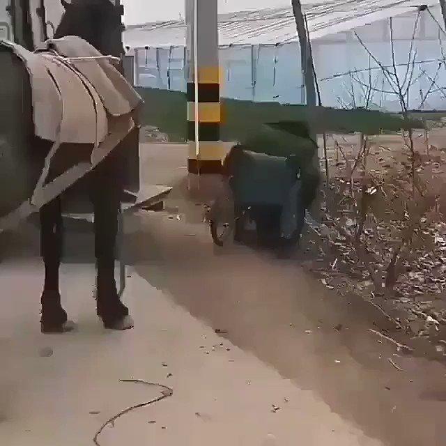 ガリバー旅行記に出てきそうなお馬さま