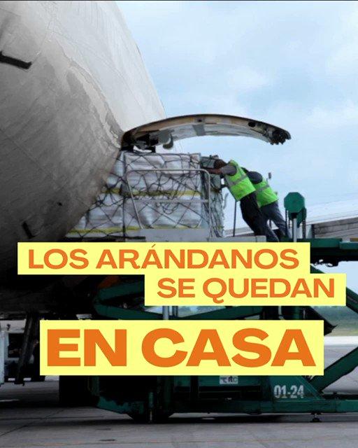 Tucumán exportaba arándanos al mundo por avión, pero ya no lo hace más❌   ¿Querés saber por qué? 👉🏽Mirá el video y enterate.