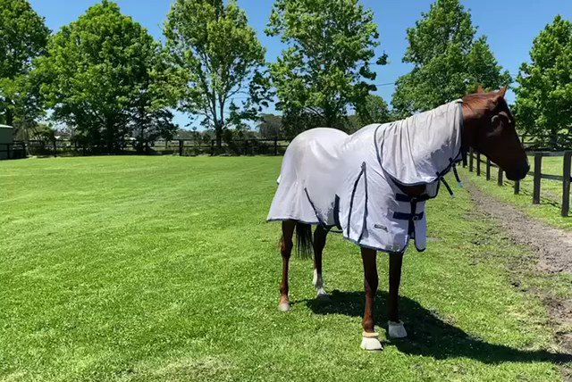 A very happy Nature Strip this afternoon after conquering #thetabeverest yesterday!   @SkyRacingAU @LimitlessLodge @tabcomau @7horseracing https://t.co/Qb0wbqhLsH.