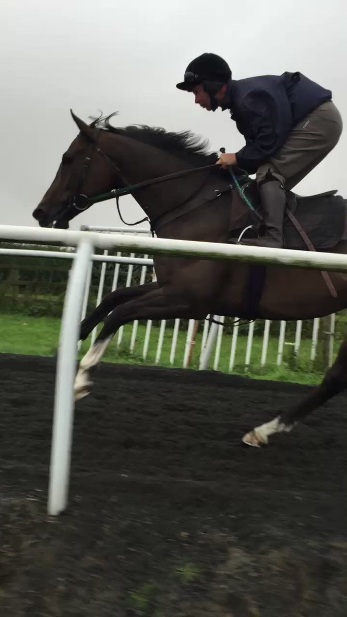 Video taken in August 2015. Gabrial cantering up Musley Bank gallop. Who was the ride ??