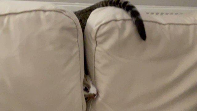 Hope you've had a better Monday than Jasper   #Fail #MondayFunday #CatsOfTwitter #Cats