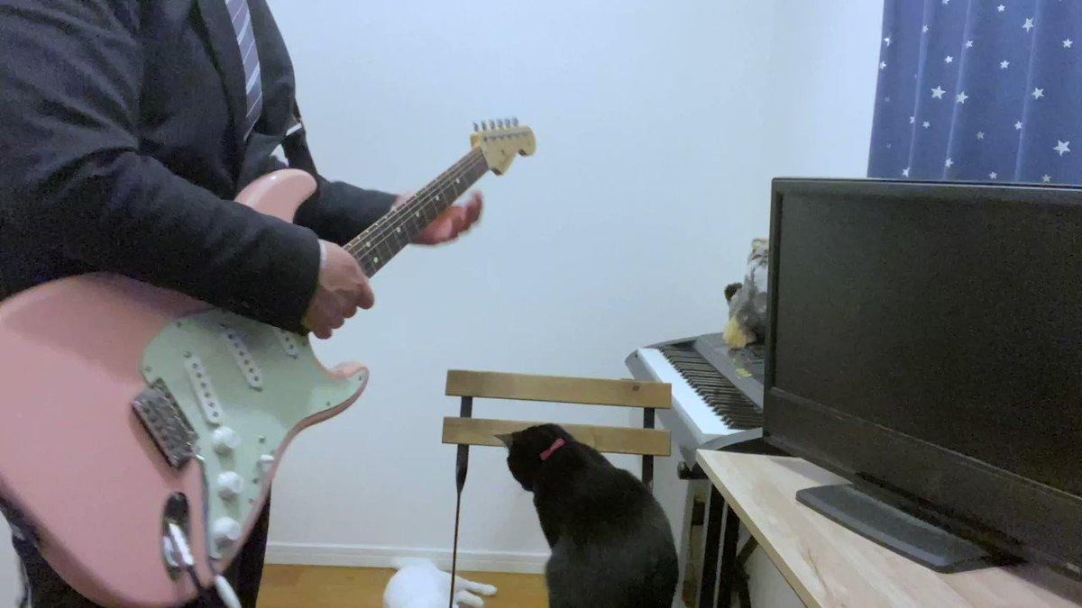 youtubeに何度も動画ブロックにあい、上げ直し、、、Twitterで間違え投稿・・・やっとちゃんと投稿できたかな?シュガーソングとビターステップ ギター弾いてみたwith黒猫,白猫