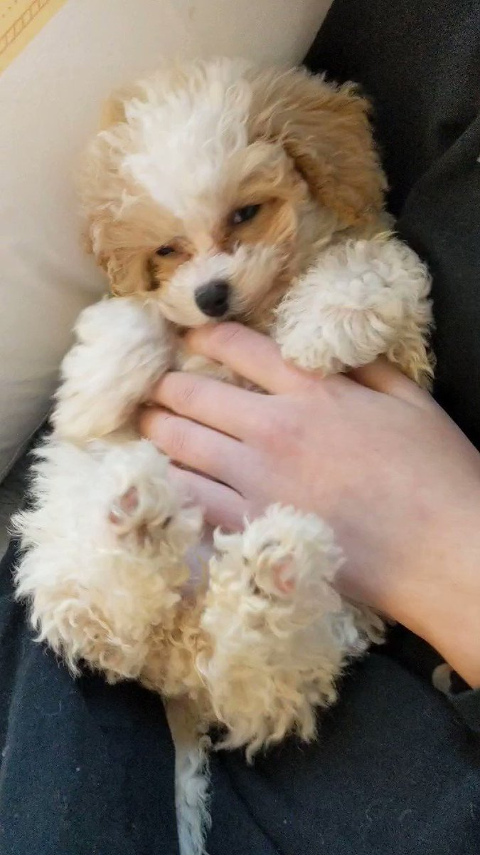 #WaybackWednesday to when I was falling asleep during my belly rubs! 😍