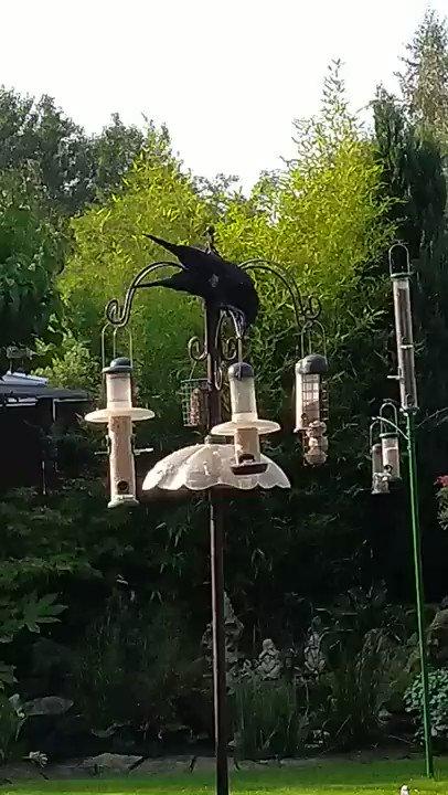 カラス「エサ落とすで」鳩「ありがとう」 鳩のためにエサやり器に細工をするカラスが賢くて感心する イギリス・マンチェスターの住宅の庭。最終的には自分が食べるためなんだろうけど、特に追い払う様子もなくてハトが食べるのも嫌がってない感じ。