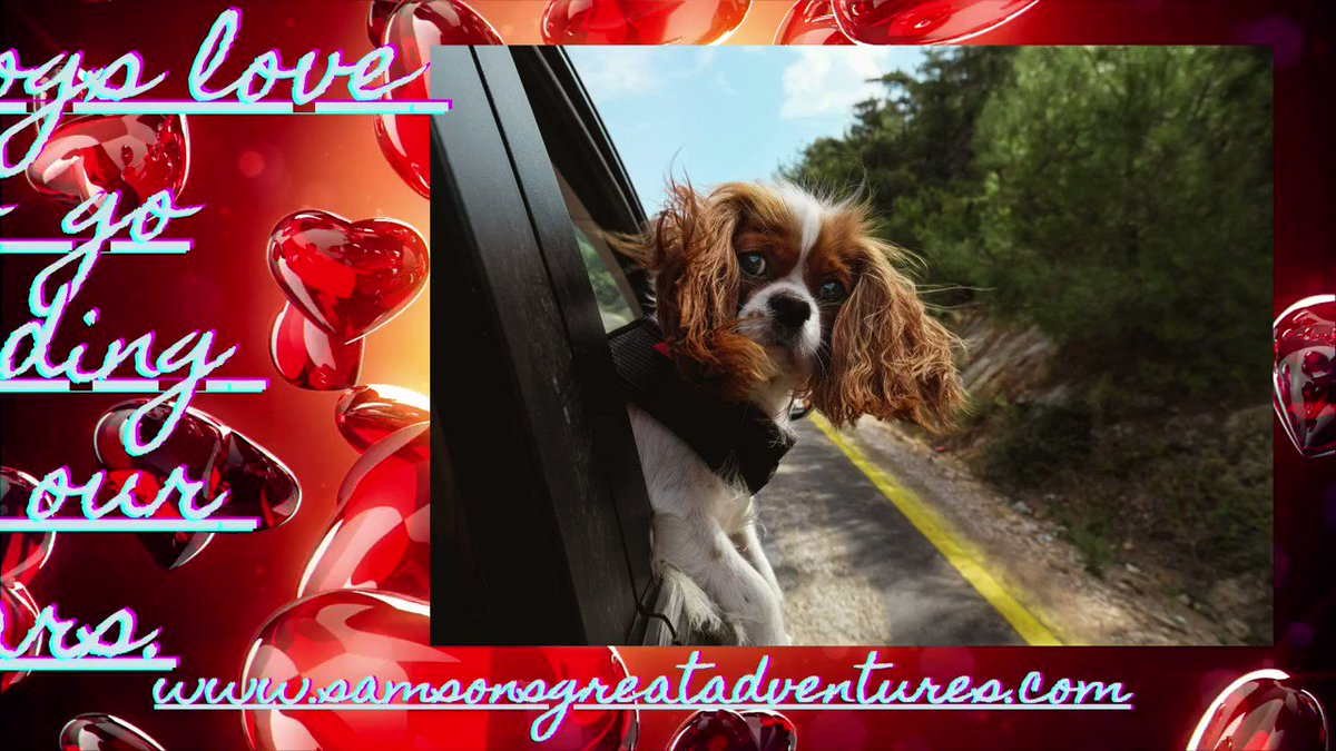 #Dogs love to go on #car #adventures. Plz join #Samson on all his great adventures.  #Samsonsgreatadventures #travelingsamson #pokemon #read #dogadventures #ebook #pdf #new #freecodefridaycontest #fridayvibes #nationalnutday #fridayvibes #fridayfeeling