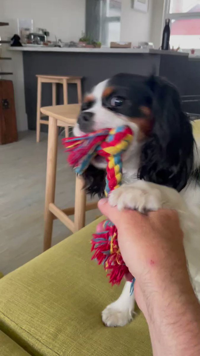 Yeti get off my toy 🐾