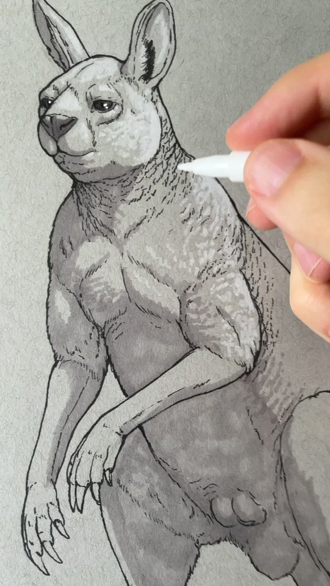 I have been thinking about/drawing a lot a Procoptodon for a commission so it felt right to draw it today for the ink/marker sketches. Here is a bit of the process from my IG stories earlier today
