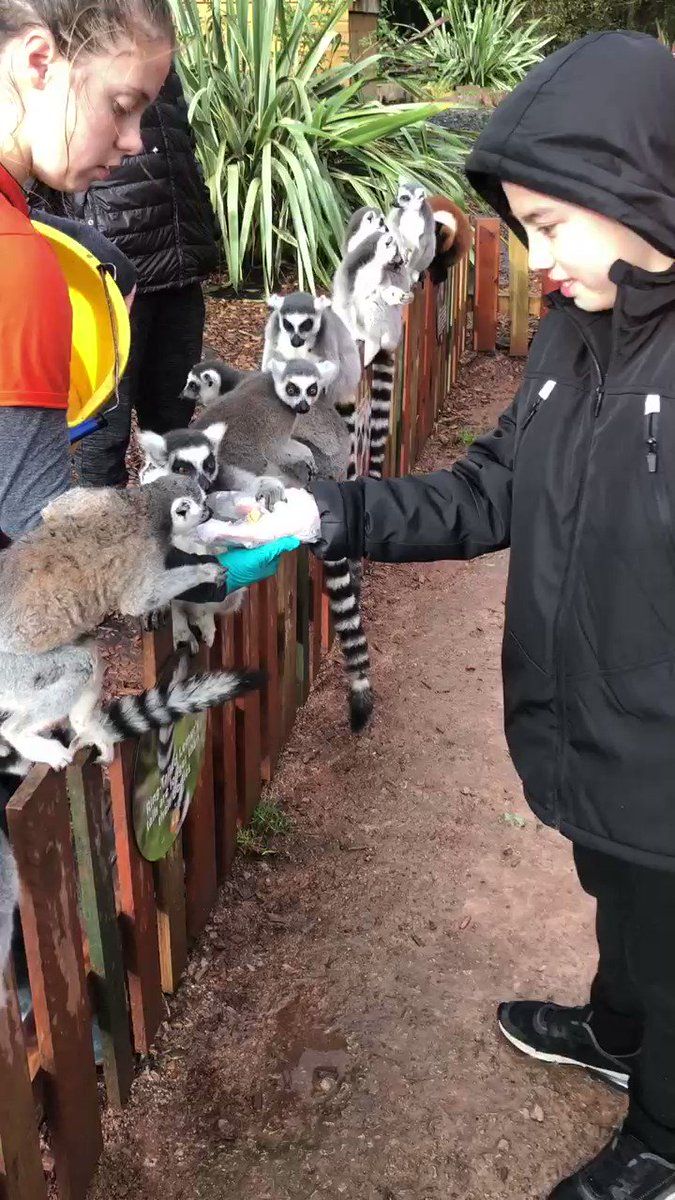 We are so proud of our son who is becoming more and more brave and getting more confident in trying new things; today it was feeding Lemurs at #SouthLakesSafariZoo  #familytime #zoo #thingstodo #lemurs #halfterm #cumbria