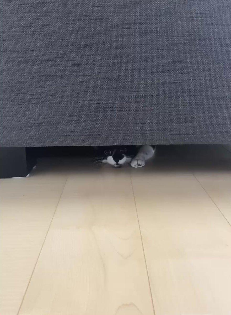 いまオヤツって言ったよね?  #猫