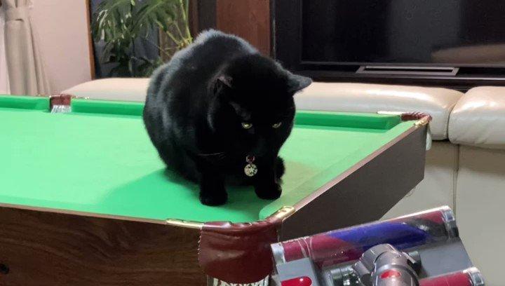 うちの猫ネコパンチするときロボットになったのかってぐらい目が光る…