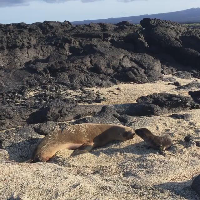 THIS IS THE CUTEST & MOST SPECIAL THING I HAVE EVER SEEN. New born sea lion pup in the Galapagos today. Wow... http://t.co/BkS1dNrcwv