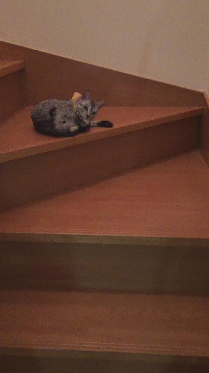 階段降りてくるときはだいたいこれ。謎