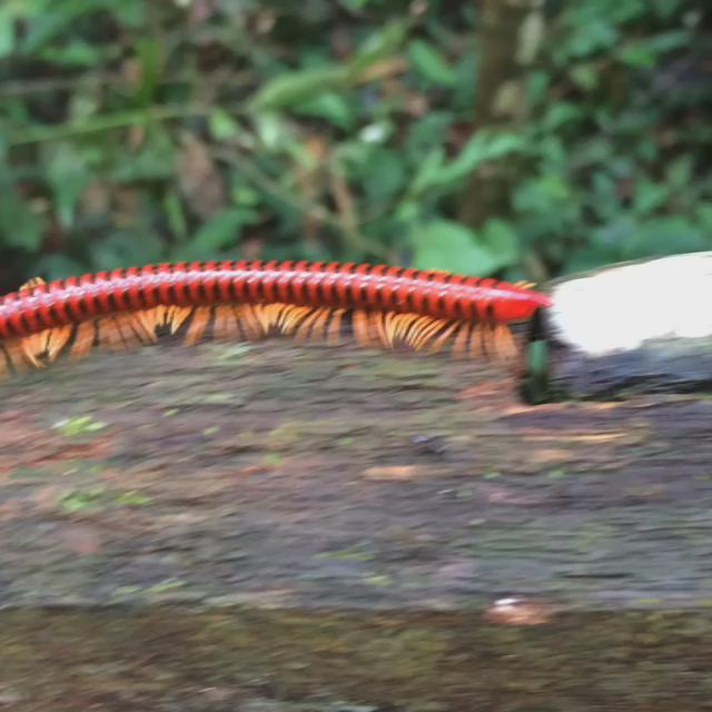 Watching wildlife at Mulu National Park, Malaysian Borneo #video http://t.co/SwH7vB3vN2