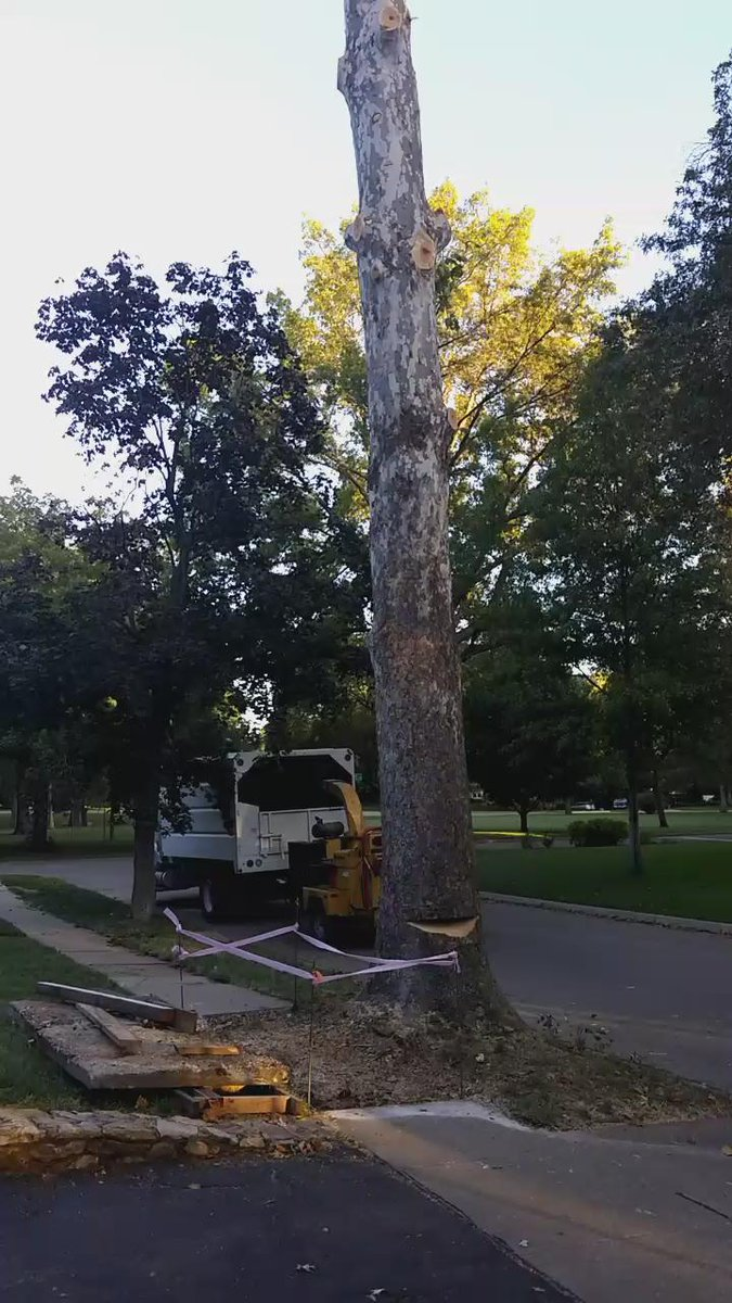 Here she is everyone. Need to remove bc owner replacing sidewalk, tree in public easement #topekatweetalong #forestry http://t.co/DUCIYf4ZuZ