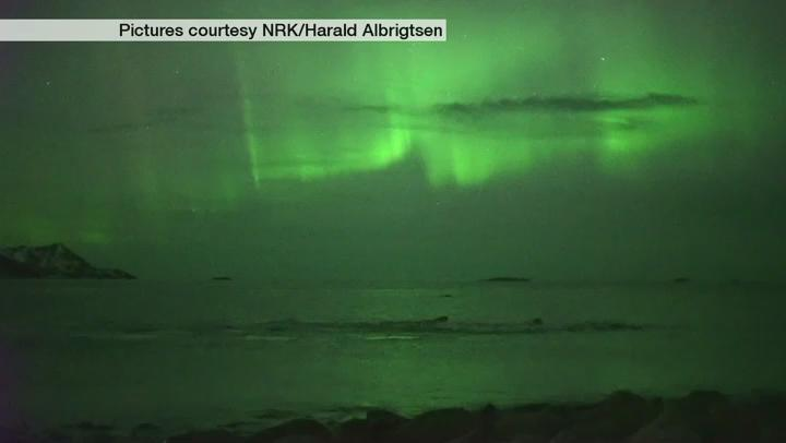 Fantastic footage of humpback whales playing under the Northern Lights in Norway yesterday. Jo
