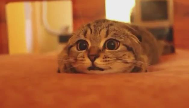 ホラー映画観てる猫の動画やて😂 可愛いすぎるんだが😂😂😂 pic.twitter.com/ep9Zk4eHrV