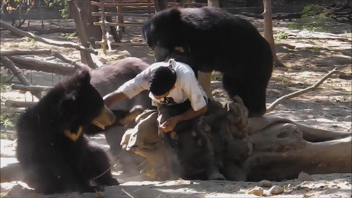 Join our Big Bear Hug to send our rescued bears some love https://t.co/F0sMYYolJy @PeterEgan6  @rickygervais :) https://t.co/B5D1cgqti9