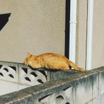 残念ながら猫も屏から落ちてしまうようです!