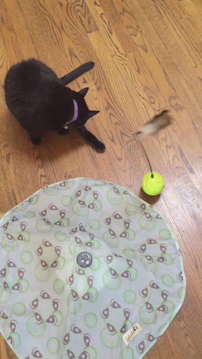 Hours of mesmerizing fun and exercise for the cat! https://t.co/3SgW7W8neB