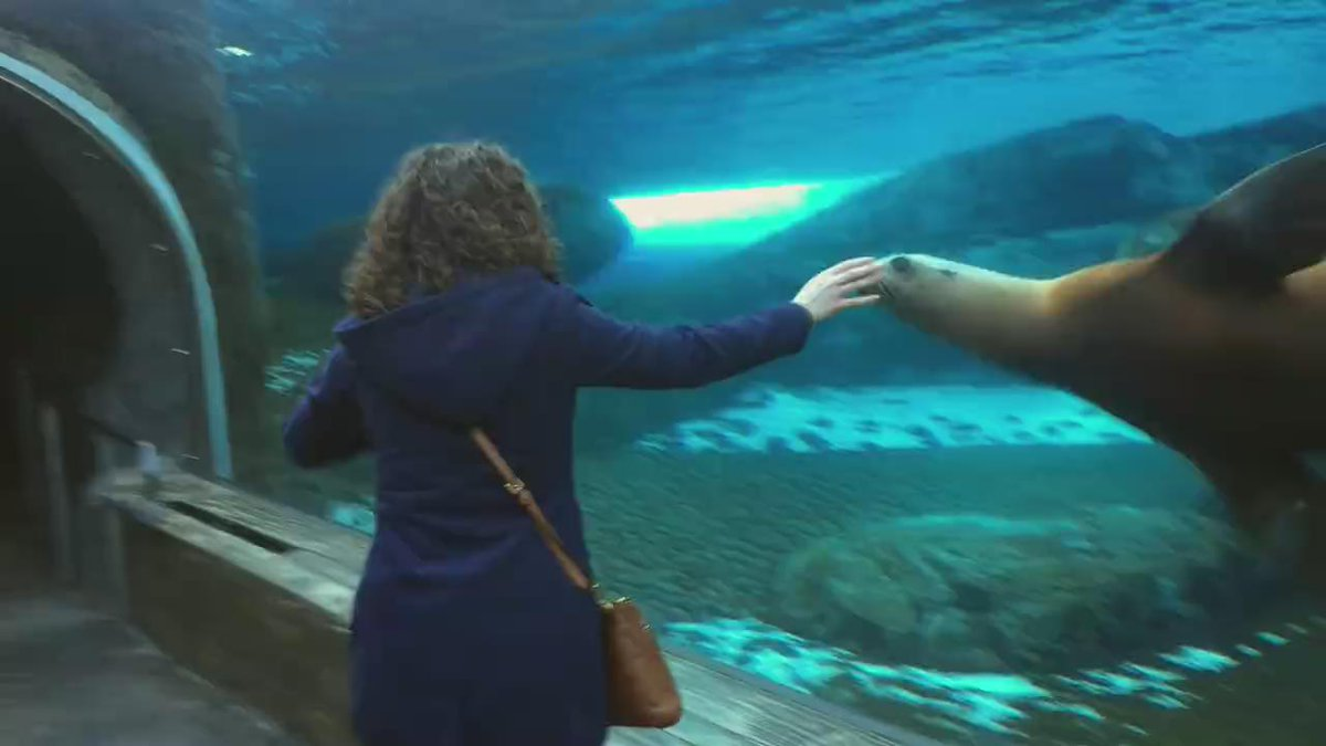 Adorable sea lion at @stlzoo makes dreams of being an animal tamer come true