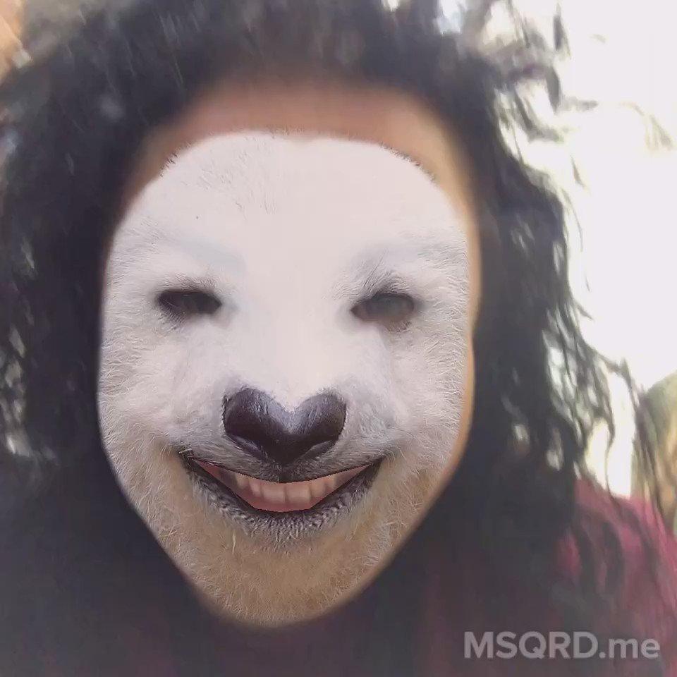 Dog, panda or polar bear? We're not sure but we think we've found @hollaaaa's spirit animal...CC @msqrdme https://t.co/dtu73cw64h