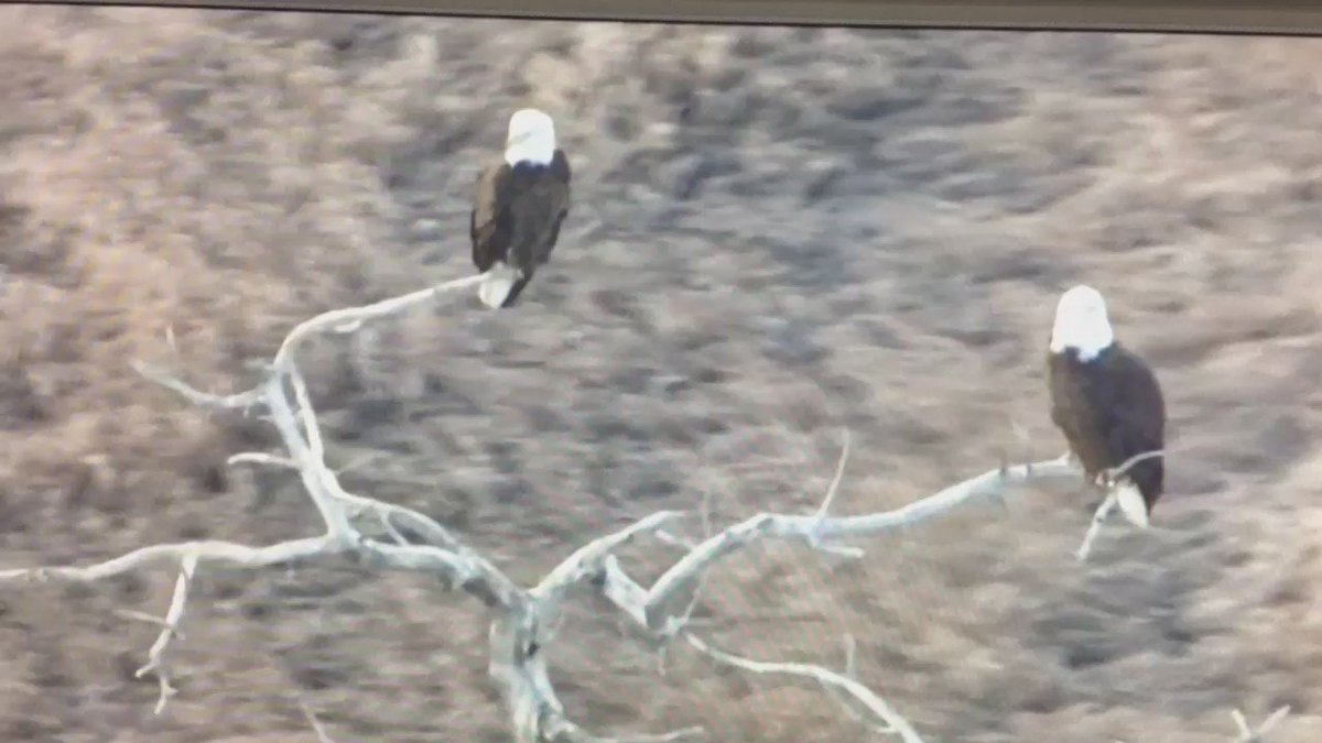 A great shot from AirTracker 7! @DenverChannel @TheNowDenver cowx America